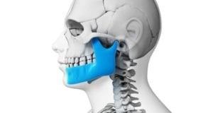 Skeleton Showing Jaw Bone in Blue